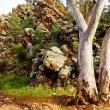 angorichina-station-gum-against-rocks